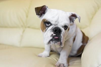 不審そうな表情の犬