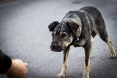人の手と警戒する犬