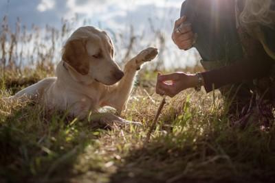 伏せてお手をする犬