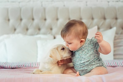 キスをするラブラドールレトリバーの子犬と赤ちゃん