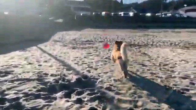 フリスビー追い掛ける犬