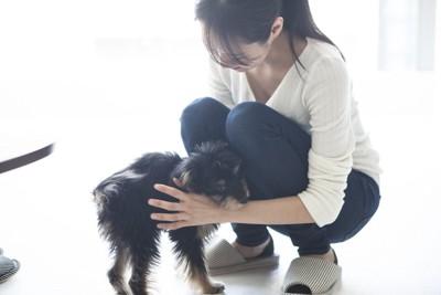 飼い主のそばに行き撫でてもらっている犬