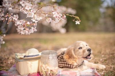 お花見を楽しむ犬