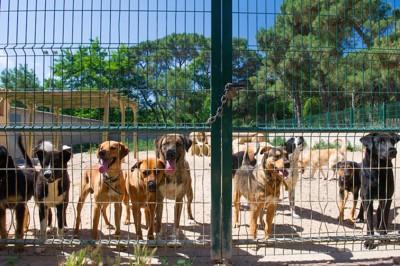 シェルターの運動場の犬たち