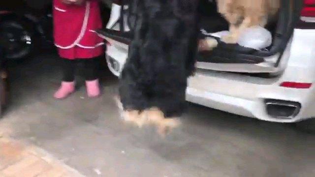 飛び乗る犬