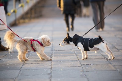 散歩中の2匹の犬