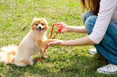 しゃがんだ飼い主にオテをする犬