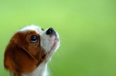 上をじっと見つめる犬の横顔