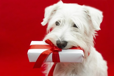 プレゼントを加える犬