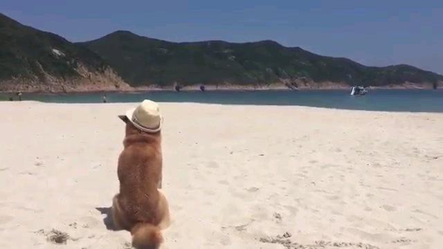 犬の後ろ姿