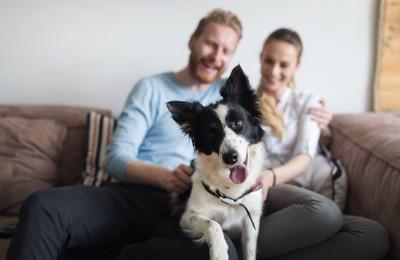 ソファーにいる夫婦と犬