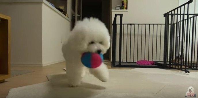 ボールを持つわたまるくん