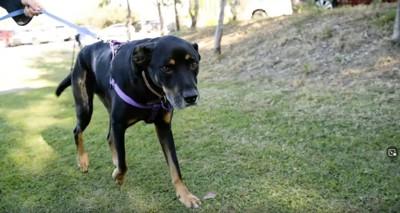 公園にリードをつけた犬