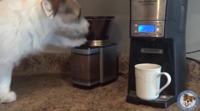 コーヒー豆を挽くjesseくん
