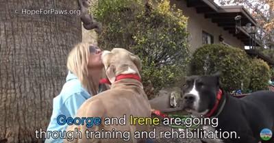 女性と2頭の犬
