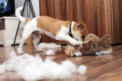 ぬいぐるみの綿を取り出す犬