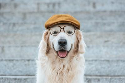 笑顔のゴールデンに帽子とメガネ