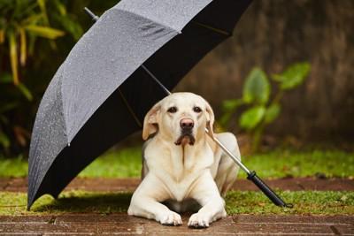 傘に入る犬