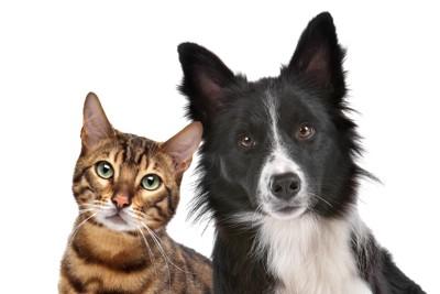 カメラ目線の犬と猫
