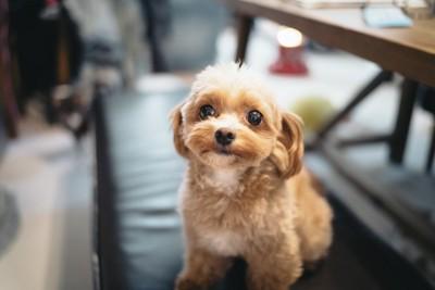 お座りする犬