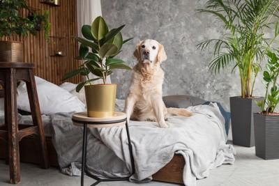 観葉植物と犬