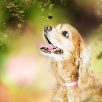 蜂を見つめる犬