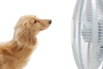 扇風機にあたっている犬