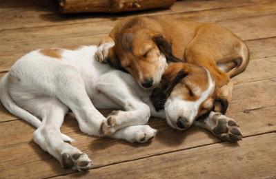 気持ち良さそうに寝る2匹の犬