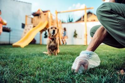 ウンチを拾う飼い主を座って見つめる犬
