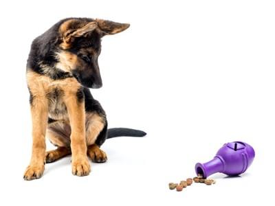 知育玩具を見る犬