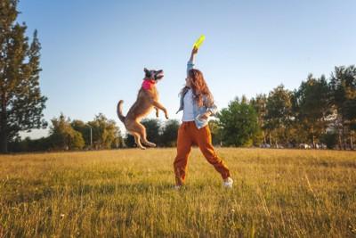 フリスビーで楽しそうに遊ぶ犬と少女