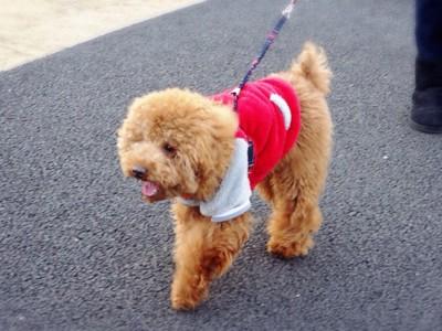 犬の散歩中の楽しそうな表情