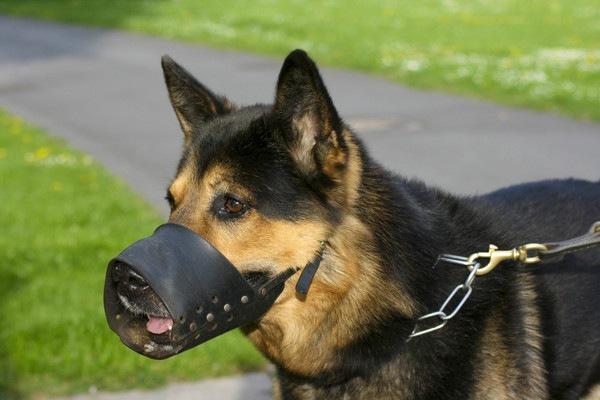 バスケット型の口輪を付けている犬