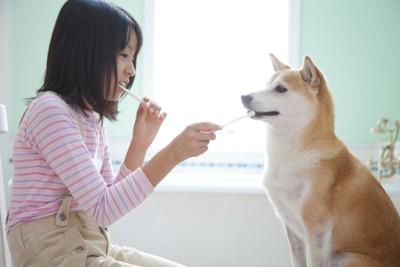 自分の歯磨きと犬の歯磨きをしている飼い主
