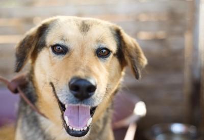 笑顔の犬の正面顔アップ