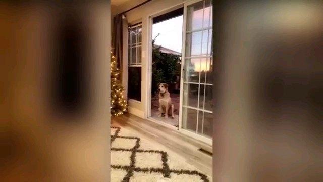 部屋の遠くから犬