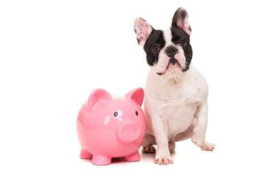 貯金箱と犬