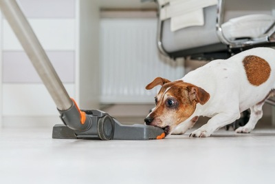 掃除機と戦っている犬