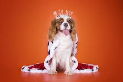 王様の格好をして座る犬