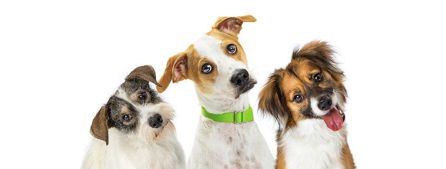 首を傾げている3匹の犬