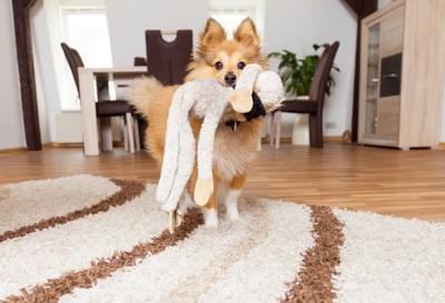 ぬいぐるみを咥える犬