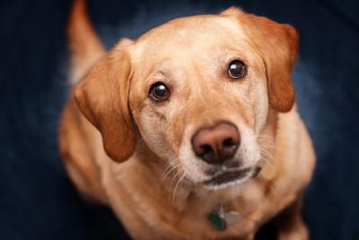 飼い主さんの足元で見上げる犬