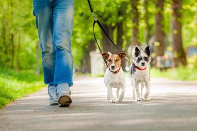 涼しげな道を散歩する二匹の犬