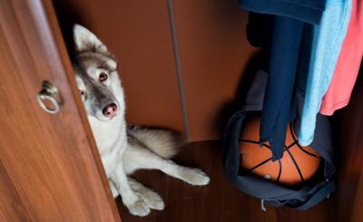 バスケットボールのあるクローゼットに隠れる犬