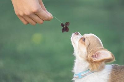 葉っぱの匂いを嗅ぐ犬