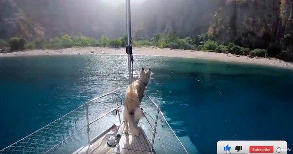 船の先端に立つ犬