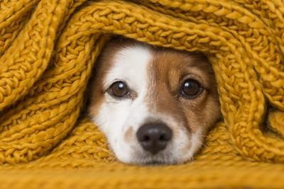 茶色い毛布に包まれた子犬