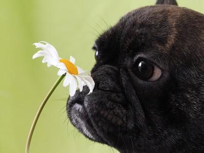 花の匂いを嗅ぐ犬の横顔