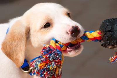♯ロープを咥える犬♯