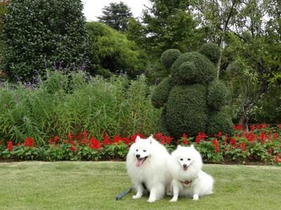 動物型の植木